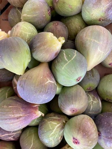 A fig is not a fruit