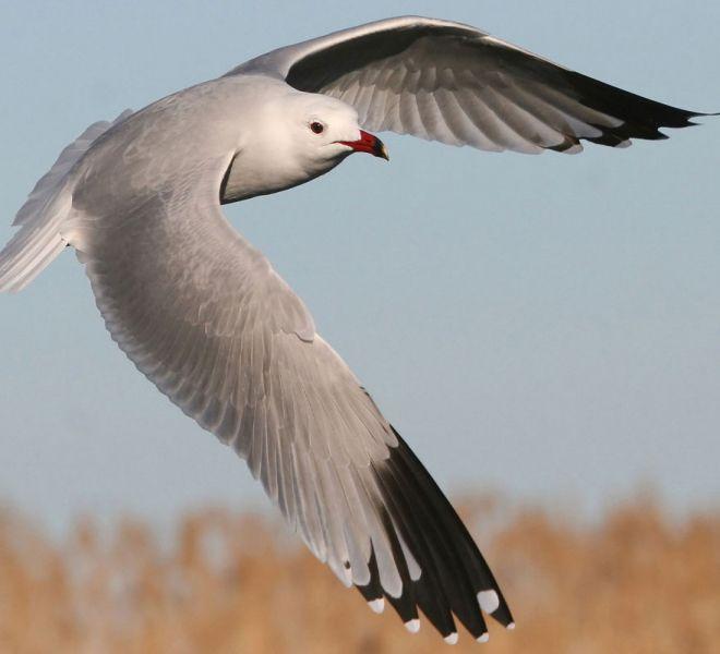 Es Moli de Son Maiol - Birdwatching in Mallorca