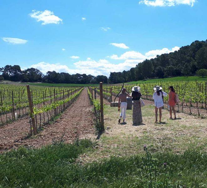 Es Moli de Son Maiol - Wine tasting experience in Mallorca
